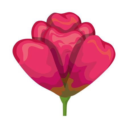 beautiful rose decorative icon vector illustration design