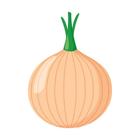 onion vegetable fresh on white background vector illustration Иллюстрация