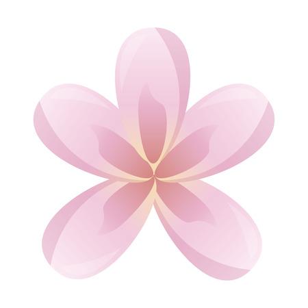 frangipani flower decoration on white background vector illustration Stok Fotoğraf - 123232085