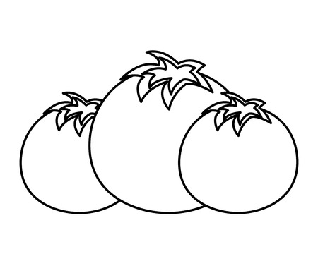 tomatoes vegetable fresh on white background vector illustration