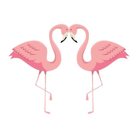 elegant flamingos birds couple vector illustration design