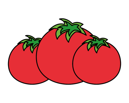 tomatoes vegetable fresh on white background vector illustration