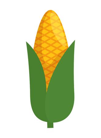 corn cob vegetable icon vector illustration design