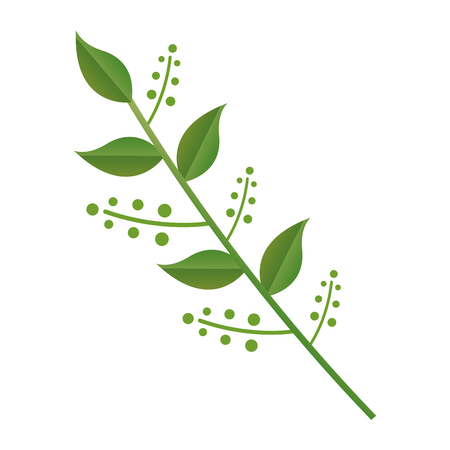 branch leaves berries on white background vector illustration design