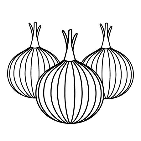 onions vegetable fresh on white background vector illustration Ilustração