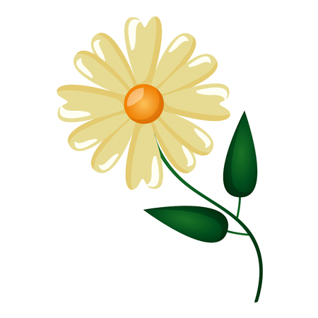 flower daisy nature on white background vector illustration