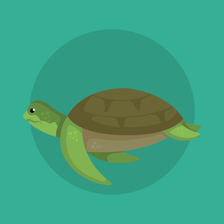 turtle wild sea animal with shell over blue background vector illustration Illustration