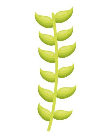 La branche verte laisse le feuillage sur fond blanc