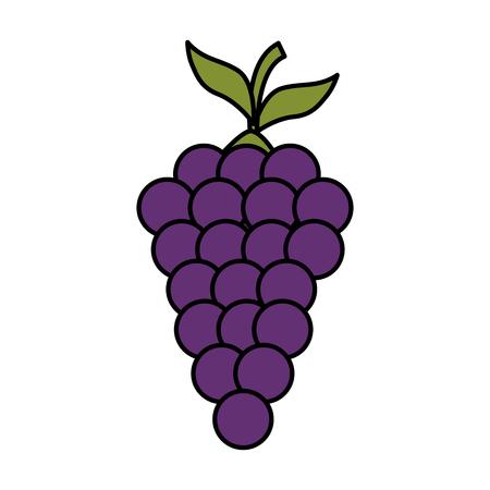 fresh grapes fruits icon vector illustration design Ilustração