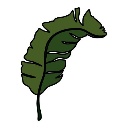tropical and exotic palm leaf vector illustration design Ilustração