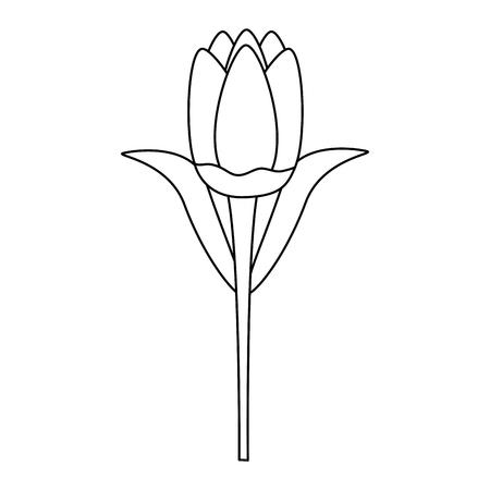 delicate flower decoration floral vector illustration  design Archivio Fotografico - 123462784