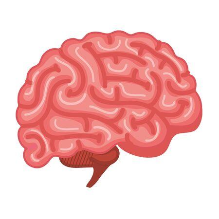 brain human organ icon vector illustration design Illustration