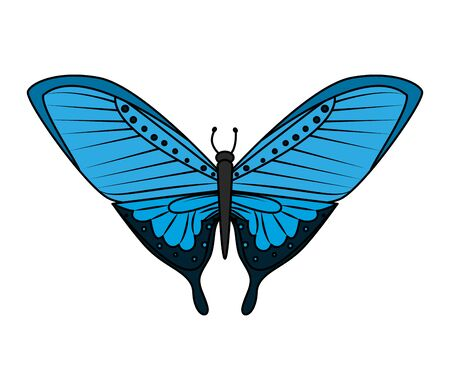 butterfly icon graphic design vector illustration Ilustração