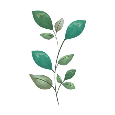 branch with leafs plant vector illustration design Çizim