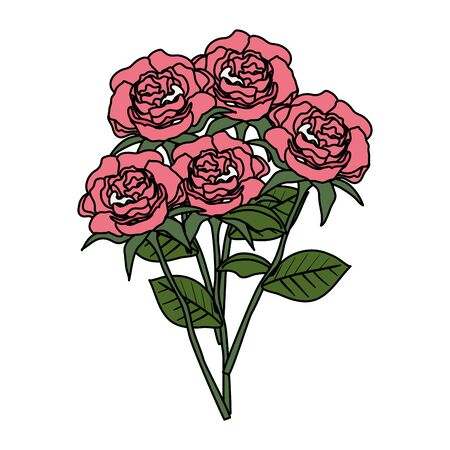 beautiful roses and leafs decoration vector illustration design  イラスト・ベクター素材