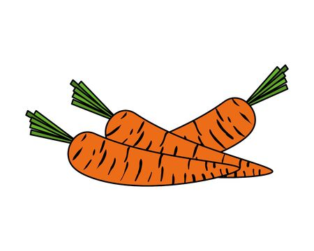 fresh carrots vegetables icon vector illustration design Ilustração