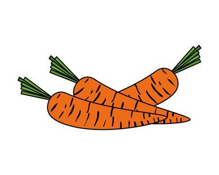 Zanahorias frescas verduras icono diseño ilustración vectorial