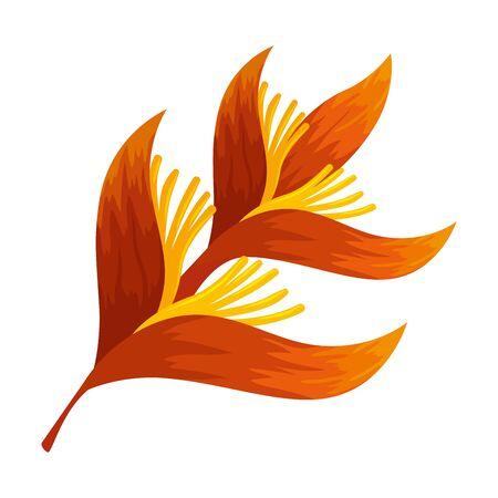 heliconia flower tropical plant vector illustration design Illustration