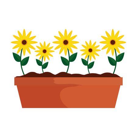sunflowers in pot icon vector illustration design