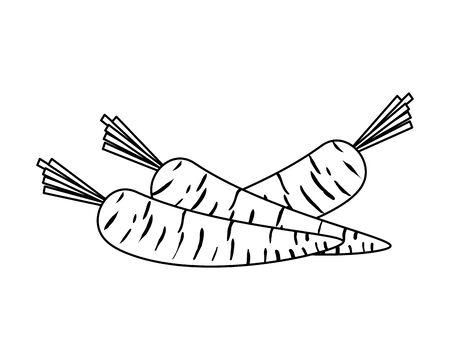 fresh carrots vegetables icon vector illustration design Illustration