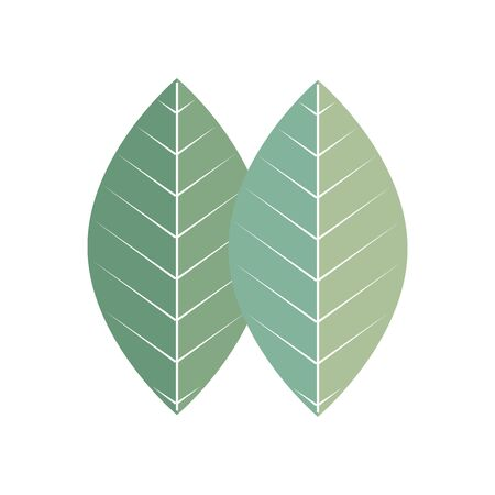 leaf plant ecology isolated icon vector illustration design