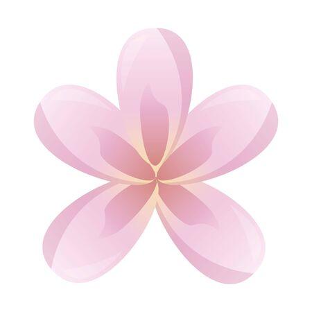 frangipani flower decoration on white background vector illustration