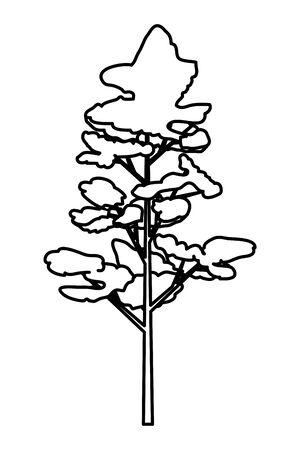 pine coniferus tree isolated icon vector illustration design Illustration