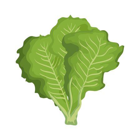 Lechuga fresca naturaleza vegetal icono diseño ilustración vectorial Ilustración de vector