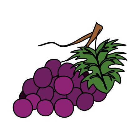 fresh grapes fruits nature icon vector illustration design