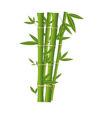 bambus roślina na białym tle ikona wektor ilustracja projekt