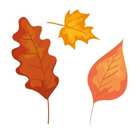 set of nature autumn leaves plants over white background, vector illustration