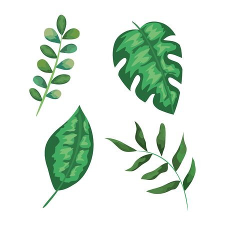 set of exotic leaves plants style over white background vector illustration