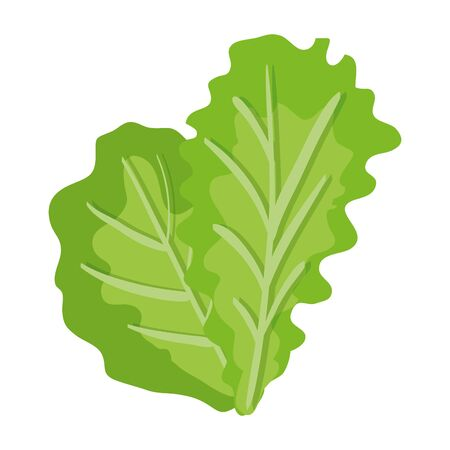 fresh lettuce vegetable healthy icon vector illustration design