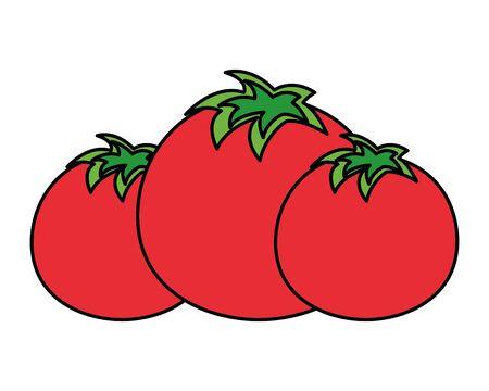 tomatoes vegetable fresh on white background vector illustration Stock Vector - 129316473