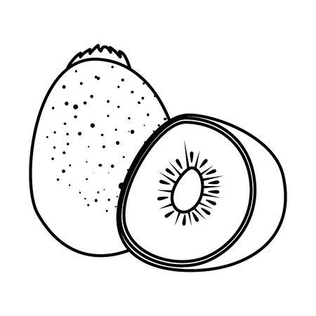 fresh kiwi half exotic fruit vector illustration design