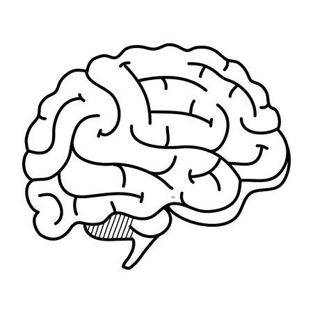 brain human organ icon vector illustration design  イラスト・ベクター素材