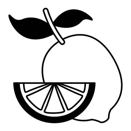 whole and slice lemon citrus vector illustration