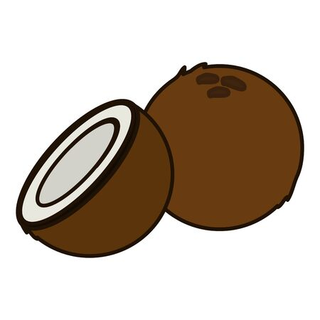 coconut tropical vector illustration on white background