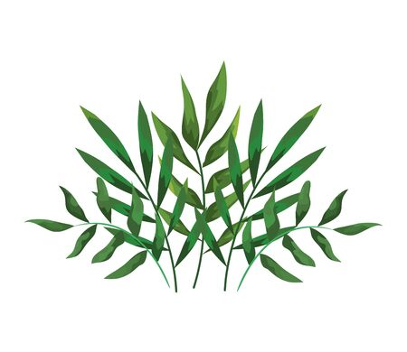 branches with leafs plants decorative icon vector illustration design  イラスト・ベクター素材
