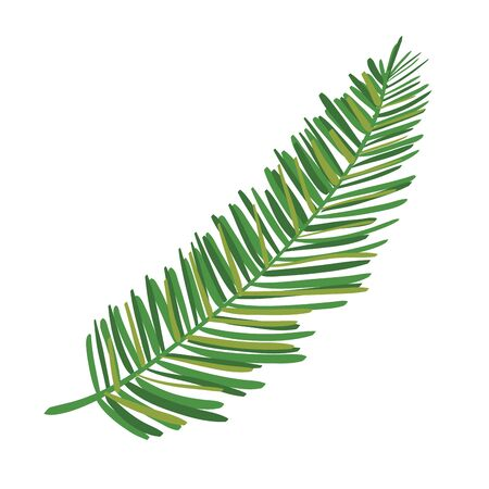 exotic leaf palm tropical icon vector illustration design
