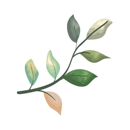 branch with leafs plant vector illustration design Ilustrace