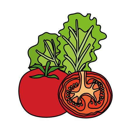 fresh tomatoes and lettuce vegetables healthy vector illustration design Ilustrace
