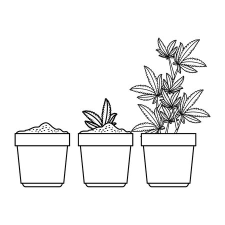cannabis plants in pots group vector illustration design Çizim