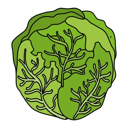 fresh cabbage vegetable healthy icon vector illustration design