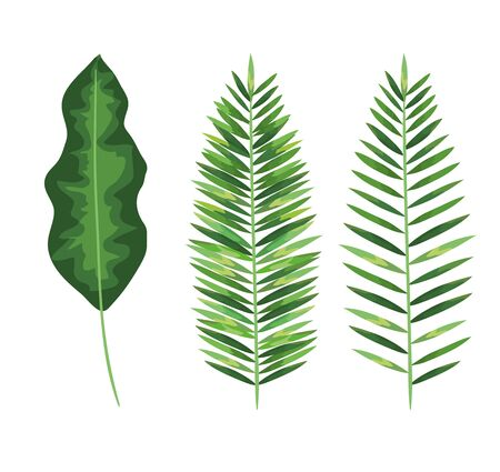 set of nature leaves plants style over white background vector illustration