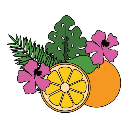 orange citrus fruit with leafs and flowers vector illustration design