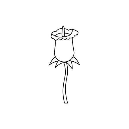 beautiful rose flower nature icon vector illustration design
