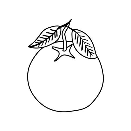 fresh orange fruit nature icon vector illustration design Illusztráció