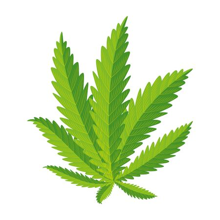 cannabis plant leafs nature icon vector illustration design