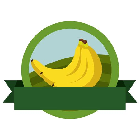 fresh bananas fruits with ribbon seal stamp vector illustration design